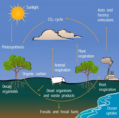 which biogeochemical cycles may be altered by anthropogenic activities on madagascar and how